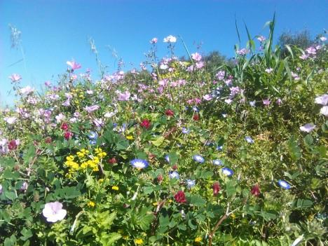 Profusión de flores